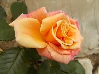 imbottigliare in letizia rose e chianti (18)