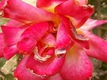 imbottigliare in letizia rose e chianti (5)