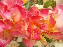 imbottigliare in letizia rose e chianti (7)