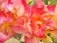 imbottigliare in letizia rose e chianti (8)