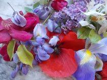 iris, lilla, melo, papavero, federica (1)