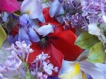 iris, lilla, melo, papavero, federica (10)
