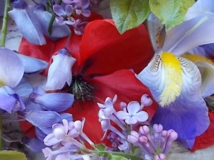 iris, lilla, melo, papavero, federica (11)