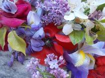 iris, lilla, melo, papavero, federica (14)