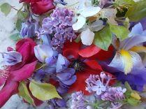 iris, lilla, melo, papavero, federica (15)