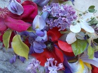 iris, lilla, melo, papavero, federica (16)