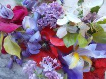 iris, lilla, melo, papavero, federica (18)