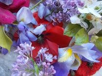 iris, lilla, melo, papavero, federica (2)