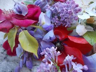 iris, lilla, melo, papavero, federica (20)