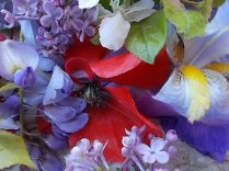 iris, lilla, melo, papavero, federica (21)