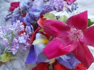 iris, lilla, melo, papavero, federica (22)