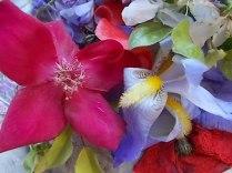 iris, lilla, melo, papavero, federica (23)