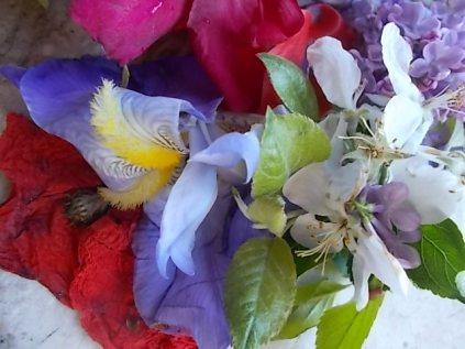 iris, lilla, melo, papavero, federica (24)
