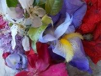 iris, lilla, melo, papavero, federica (25)