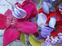 iris, lilla, melo, papavero, federica (3)