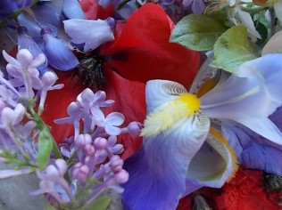 iris, lilla, melo, papavero, federica (4)