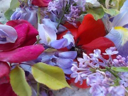 iris, lilla, melo, papavero, federica (6)