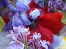 iris, lilla, melo, papavero, federica (7)