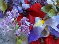 iris, lilla, melo, papavero, federica (8)