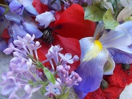 iris, lilla, melo, papavero, federica (9)