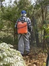 ramare l'orto vertine (2)
