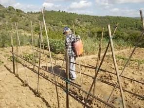 ramare l'orto vertine (7)