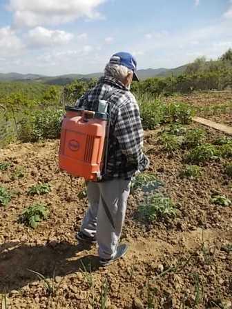 ramare l'orto vertine (9)