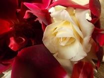 rosa bianca e porpora vertine (14)