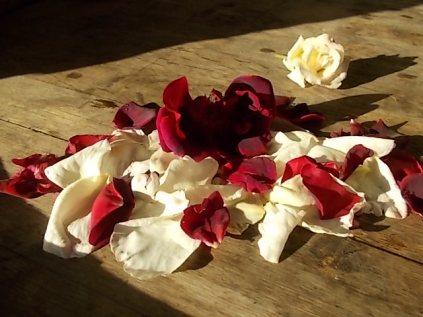 rosa bianca e porpora vertine (23)