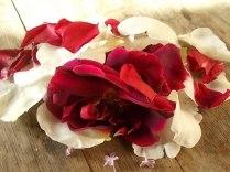 rosa bianca e porpora vertine (6)