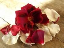 rosa bianca e porpora vertine (8)