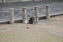 siena, erba in piazza del campo 2020 (10)