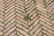 siena, erba in piazza del campo 2020 (15)