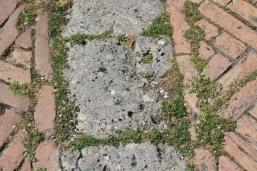 siena, erba in piazza del campo 2020 (18)