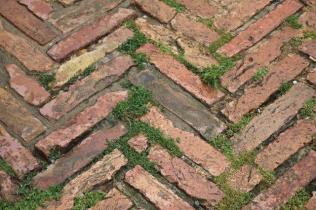 siena, erba in piazza del campo 2020 (27)