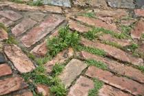 siena, erba in piazza del campo 2020 (31)