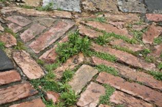 siena, erba in piazza del campo 2020 (32)