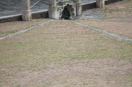 siena, erba in piazza del campo 2020 (5)