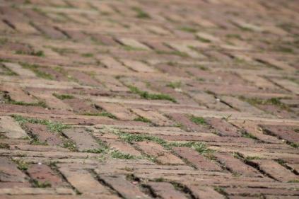 siena, erba in piazza del campo 2020 (9)