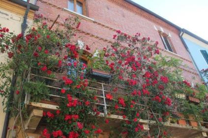terrazzo di rose rapolano terme (1)