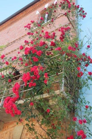 terrazzo di rose rapolano terme (12)