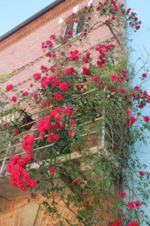 terrazzo di rose rapolano terme (13)