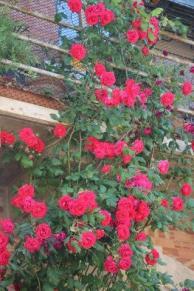 terrazzo di rose rapolano terme (15)