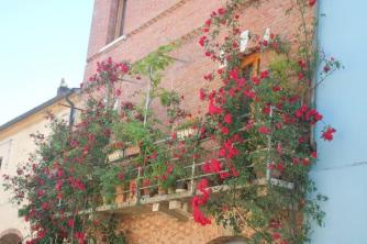 terrazzo di rose rapolano terme (4)