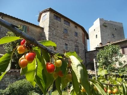 vertine ciliegie nell'orto (2)