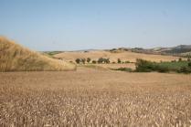 girasoli, biancane, leonina, grano, (4)