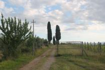 pacina vigna recinzione e cancello (2)
