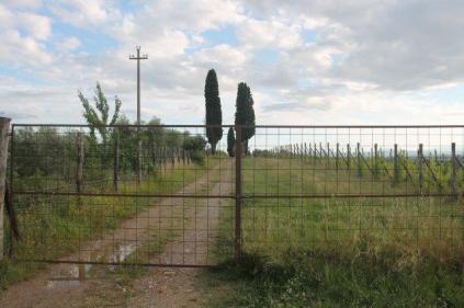 pacina vigna recinzione e cancello (3)