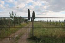 pacina vigna recinzione e cancello (4)