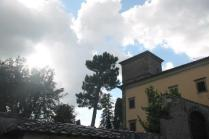 vasi olivo castello di albola (4)